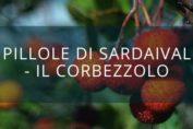 Pillole di Sardaival - il Corbezzolo